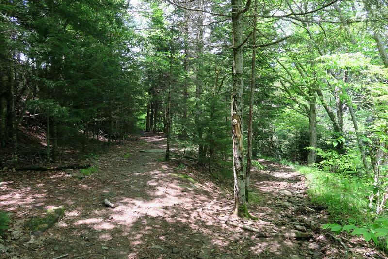 Ivestor Gap/Little East Fork Trail Junction -- 5,700'