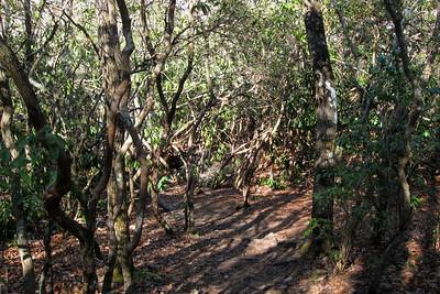 John Rock Trail -- 2,900'