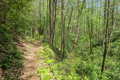 Laurel Creek Trail -- 2,550'