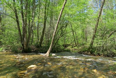 Laurel Creek Trail @ Bradley Creek -- 2,420'
