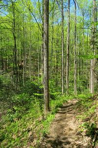 Laurel Creek Trail -- 2,800'