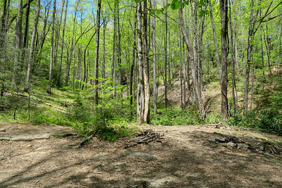 Laurel Creek Trail -- 2,750'