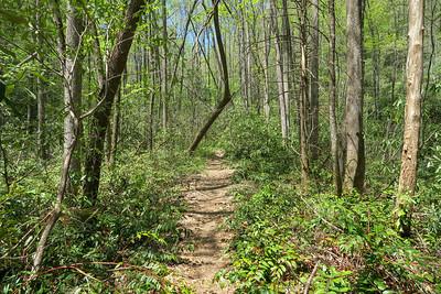 Laurel Creek Trail -- 2,680'