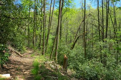 Laurel Creek Trail -- 2,640'