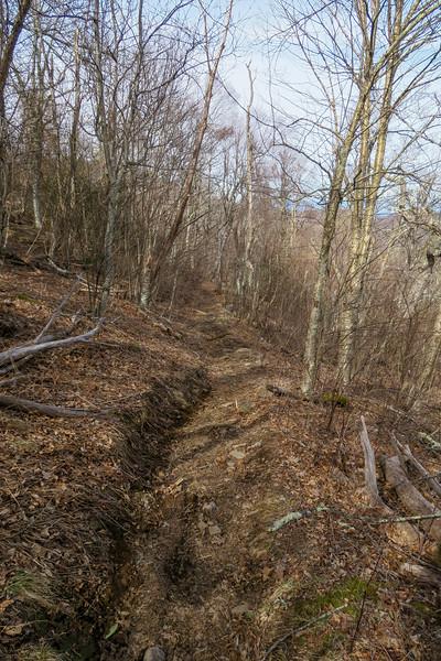 Laurel Mountain Connector Trail -- 4,750'