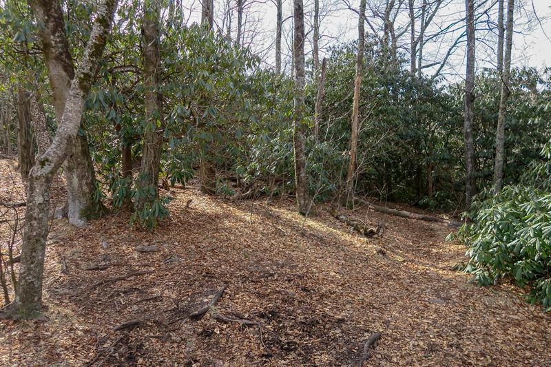 Laurel Mountain Connector/Laurel Mountain Trail Junction -- 4,660'
