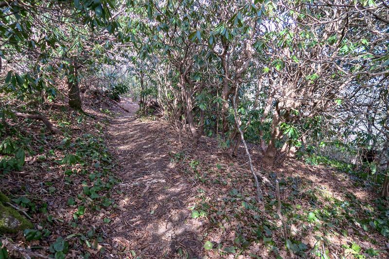 Laurel Mountain Connector Trail -- 4,820'
