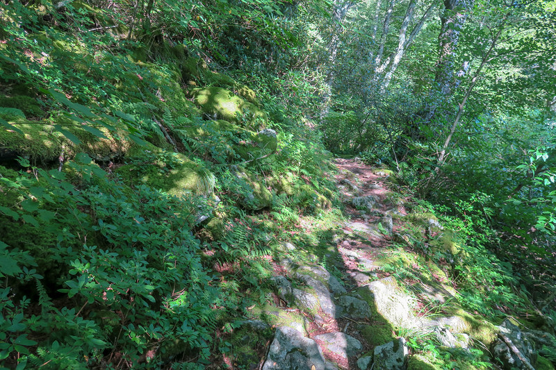 Laurel Mountain Trail -- 4,760'