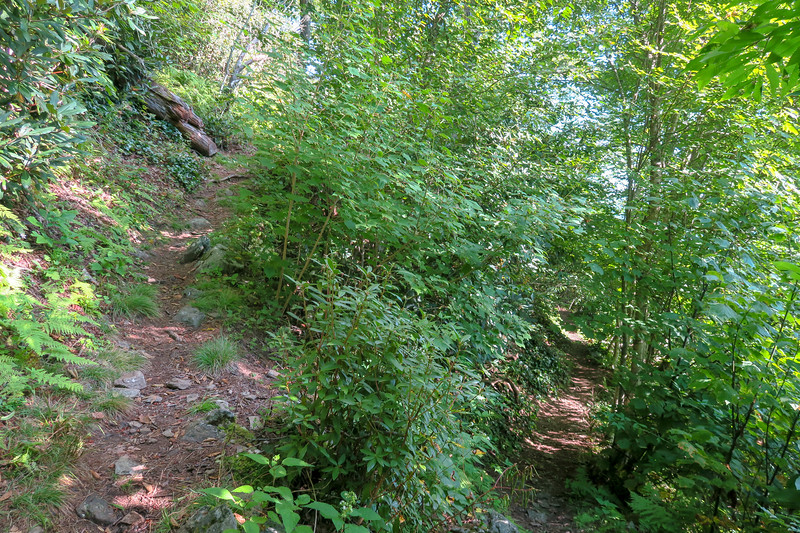 Laurel Mountain Trail -- 4,820'