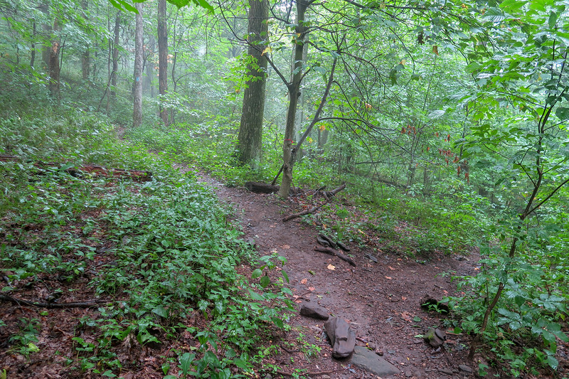 Laurel Mountain Trail/Slate Rock-Laurel Mountain Connector Path Junction -- 4,080'
