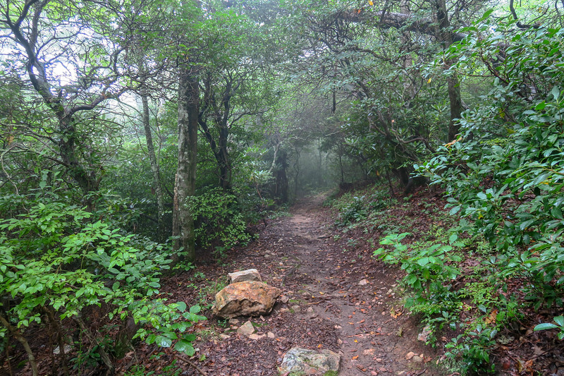 Laurel Mountain Trail -- 4,220'