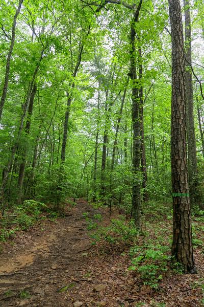 Ledford Branch Trail -- 2,280'