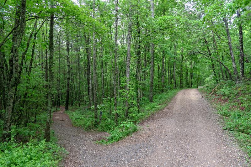 Ledford Branch Trail @ F.R. 479E -- 2,350'