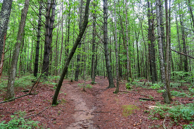 Ledford Branch Trail -- 2,330'