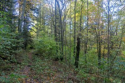 Little East Fork Trail -- 5,150'
