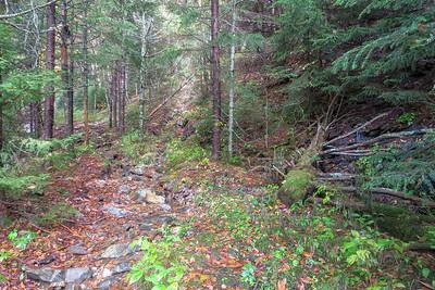 Little East Fork Trail -- 5,560'