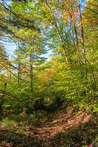 Little East Fork Trail -- 4,750'