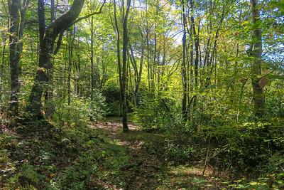 Little East Fork Trail -- 4,800'