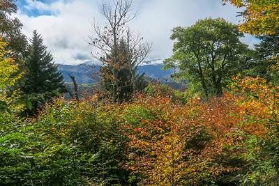 Little East Fork Trail -- 5,650'