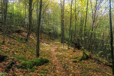 Little East Fork Trail -- 5,420'