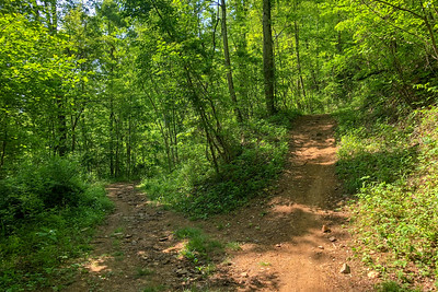 Little Hickory Top/Sidehill Trail Junction -- 2,760'