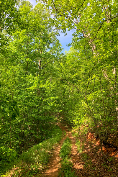 Little Hickory Top Trail -- 2,520'