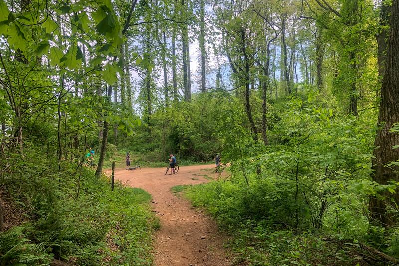Little Hickory Top Trail @ Ingles Fields Gap -- 2,940'