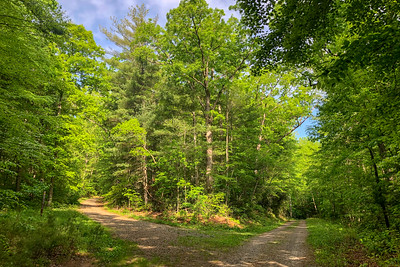 Little Hickory Top Trail/F.R. 479F Junction -- 2,350'