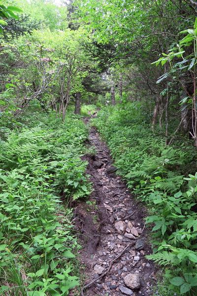 Little Sam Trail -- 5,740'