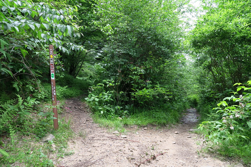 Little Sam/Flat Laurel Creek Trail Junction -- 5,500'