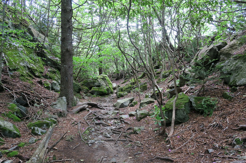 Little Sam Trail -- 5,580'