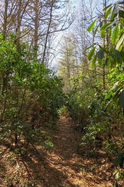 Long Branch Trail -- 2,970'