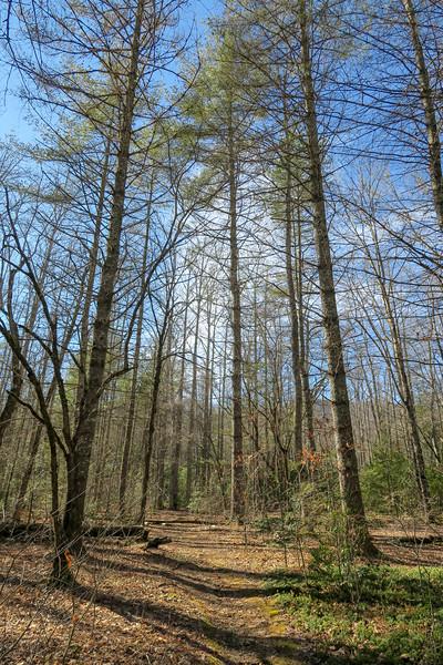 Long Branch Trail -- 3,000'