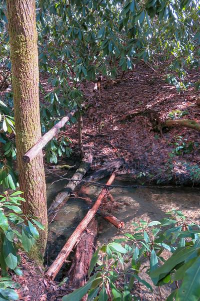 Long Branch Trail @ Searcy Creek -- 2,650'