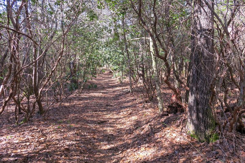 Long Branch Trail -- 2,960'