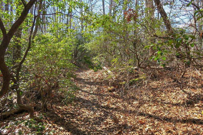 Long Branch Trail -- 3,060'
