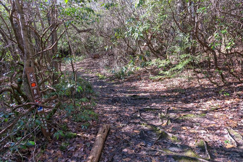 Long Branch/Cemetery Loop Trail Junction -- 2,950'
