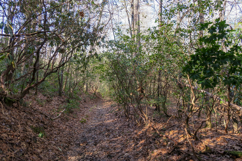 Long Branch Trail -- 3,020'