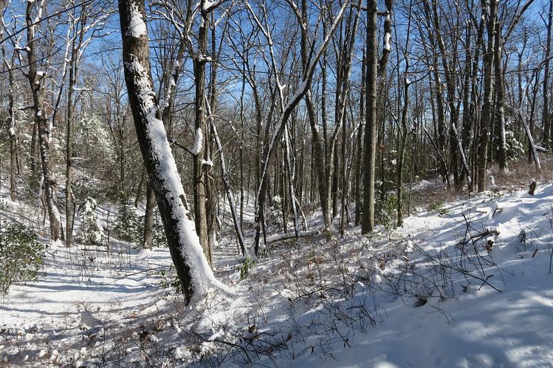 Looking Glass Rock Trail -- 3,340'