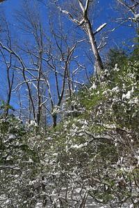 Looking Glass Rock Trail -- 2,960'
