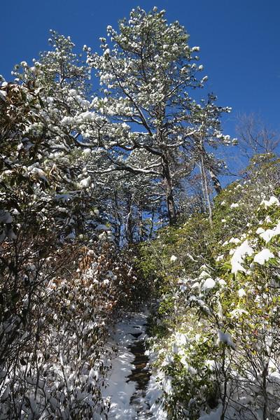 Looking Glass Rock Trail -- 3,500'