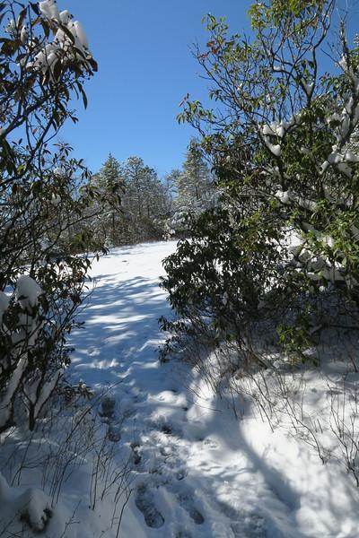Looking Glass Rock Trail @ West Cliffs Spur Path -- 3,520'