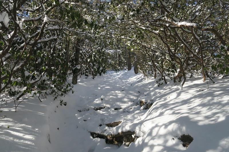 Looking Glass Rock Trail -- 3,880'