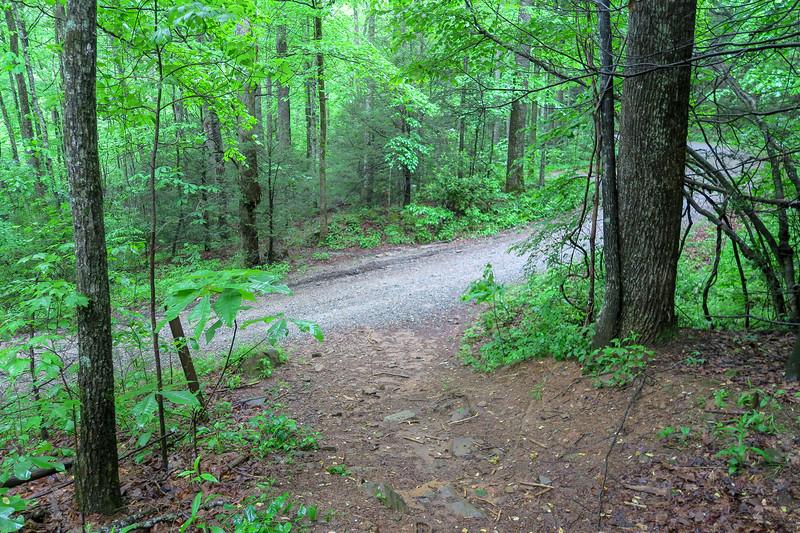 Lower Sidehill Trail @ F.R. 479
