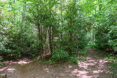Middle Fork/Fletcher Creek Trail Junction -- 2,610'