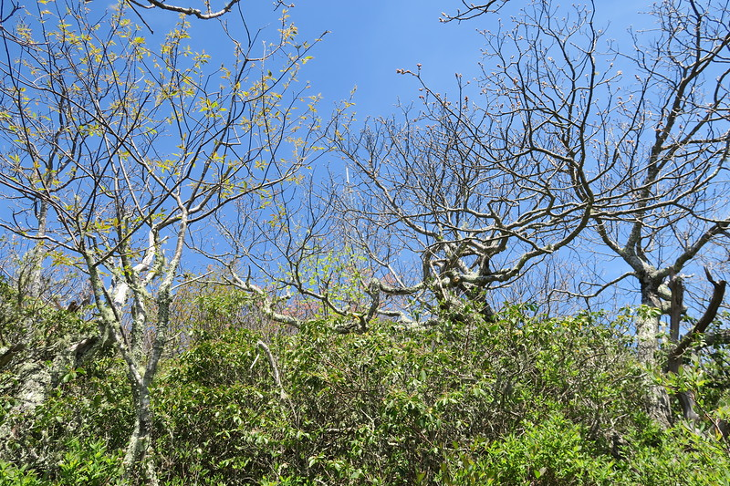 Mount Pisgah Trail -- 5,550'
