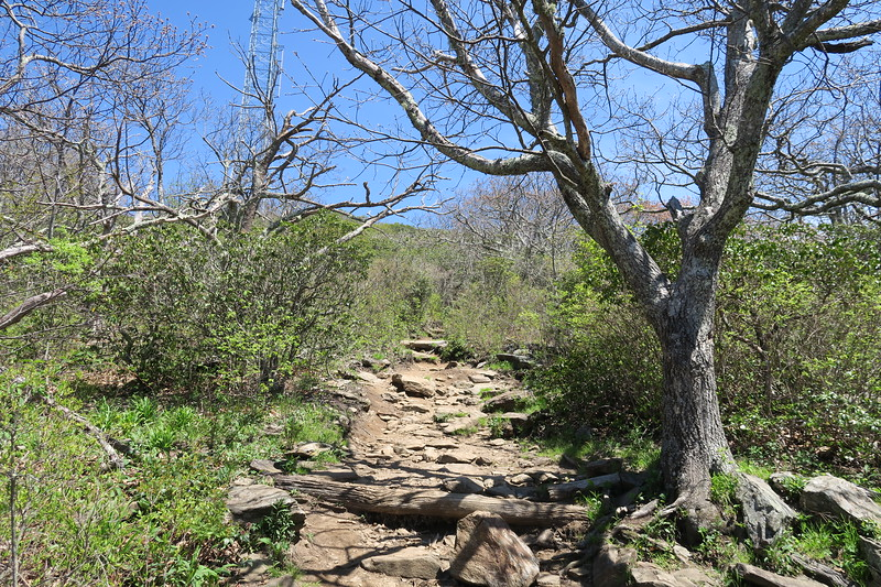 Mount Pisgah Trail -- 5,600'