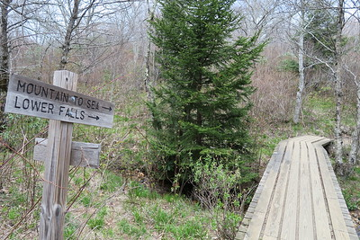 Mountains-to-Sea Access/Graveyard Fields Loop Trail Junction