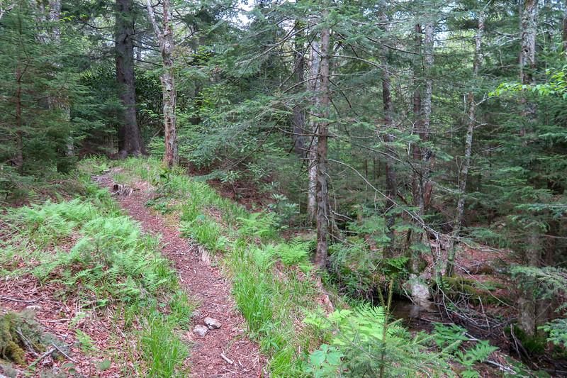 Mountains-to-Sea Trail -- 5,650'