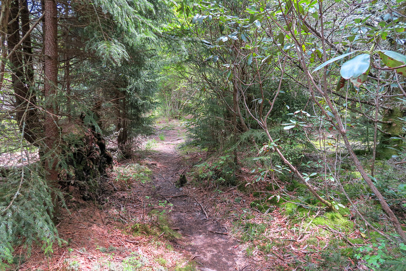 Mountains-to-Sea Trail -- 5,520'